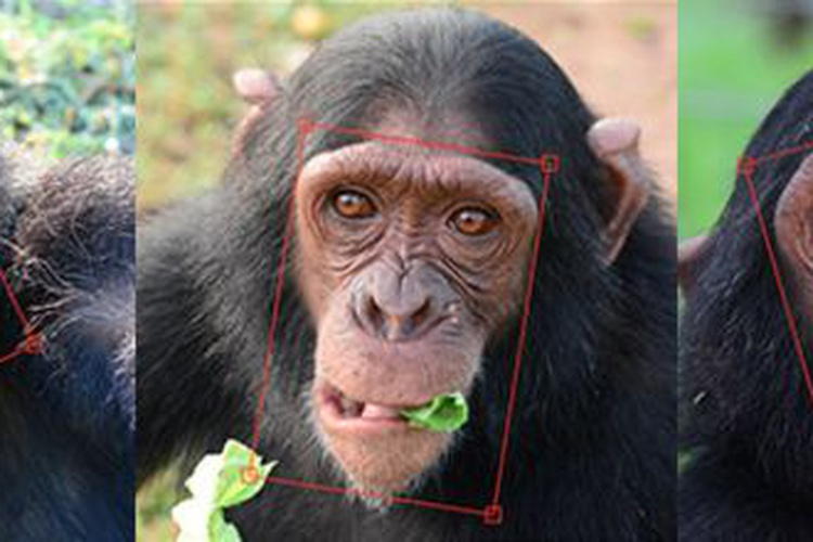 CHIMPFACE